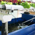 Best Types Of Fish For Aquaponics