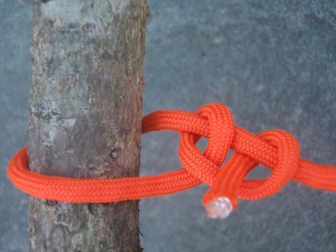 Survival knot1