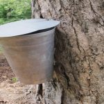 6 Trees Every Survivalist Should Know & Why