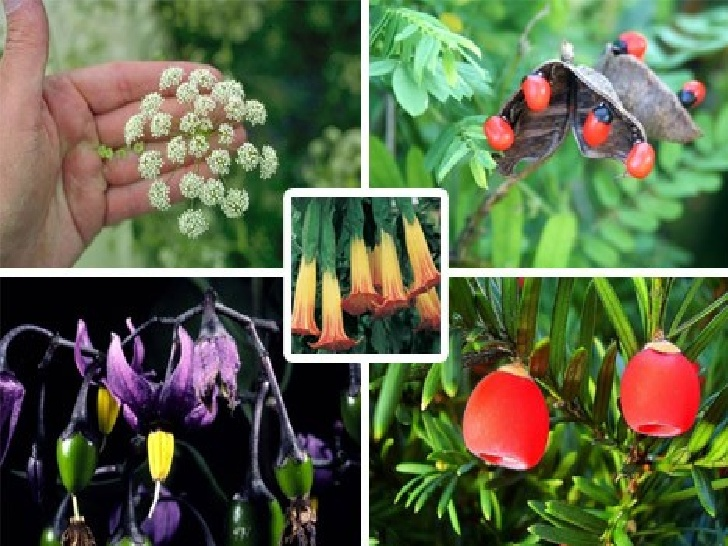 21 Plants You Should Never Eat Or Touch