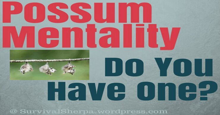 Top 8 Reasons You Need A Possum Mentality To Survive What's Coming