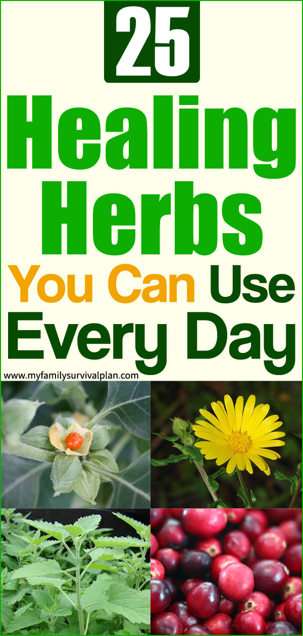 25 Healing Herbs You Can Use Every Day