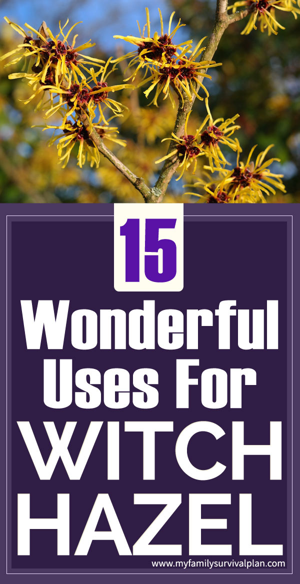 15 Wonderful Uses For Witch Hazel