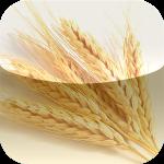 e-food-storage-app