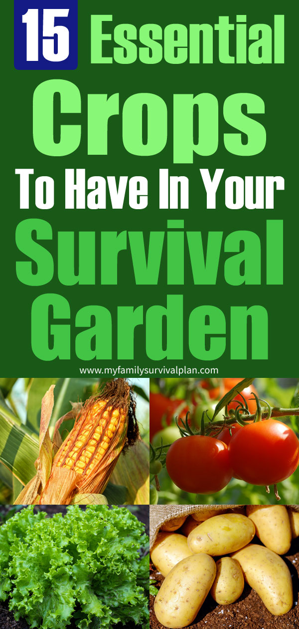 15 Essential Crops To Have In Your Survival Garden