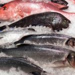 5 Of The Most Nutritious Fish You Can Eat