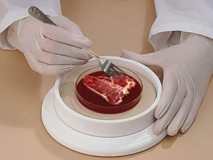news-lab-grown-meat