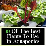 19 Of The Best Plants To Use In Aquaponics