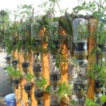 How Aquaponics Works