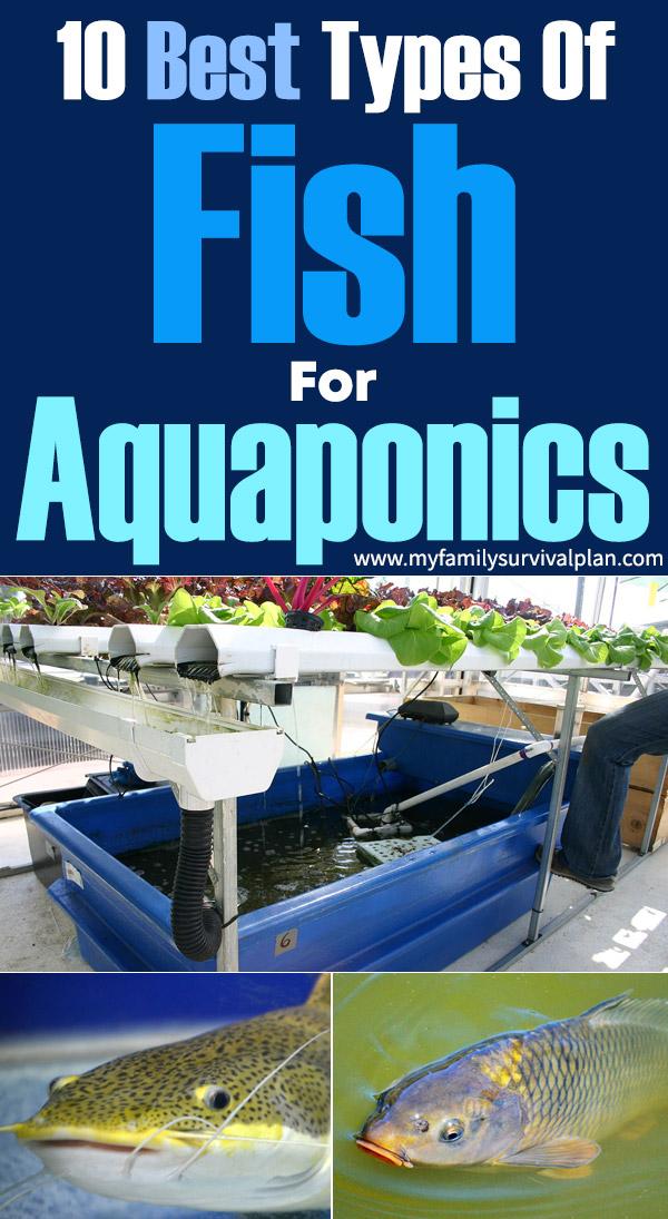 10 Best Types Of Fish For Aquaponics - PI