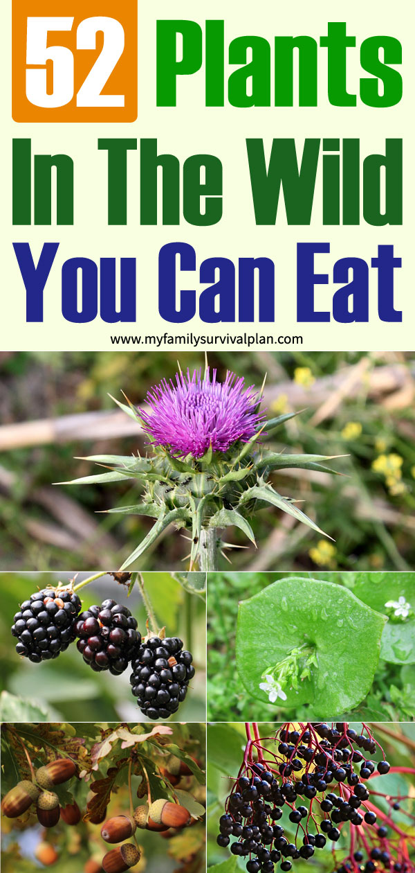 52 Plants In The Wild You Can Eat