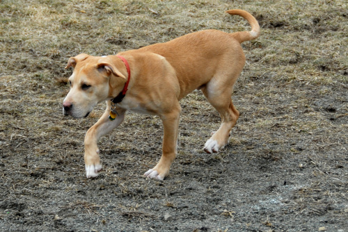Survival Dogs – Lifesavers or Burdens?