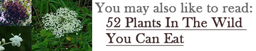 52 plants you can eat