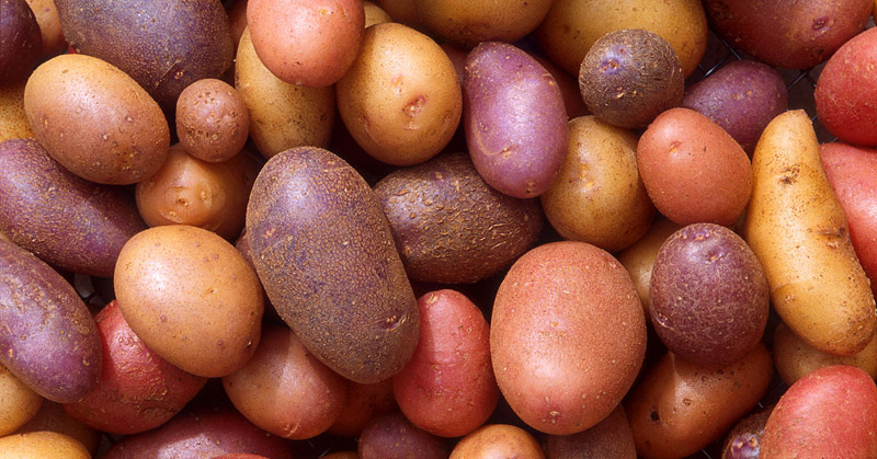 How To Store Potatoes For Long Periods Of Time