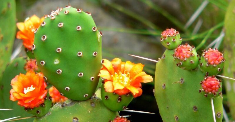 Plants That Will Save Your Life - 5 Plants With Nutritional And Medicinal Value