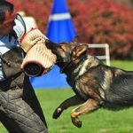 The Best 5 Dog Breeds For Your Personal Protection